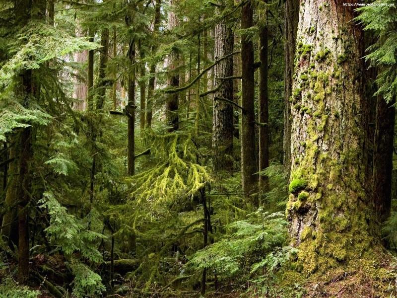 От всех арендаторов лесного фонда в бюджет республики Хакасии поступило около 17 миллионов рублей, что на 4 млн...