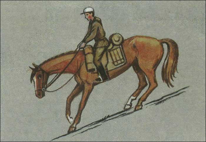 Суть правильной посадки в том, чтобы не мешать лошади двигаться.