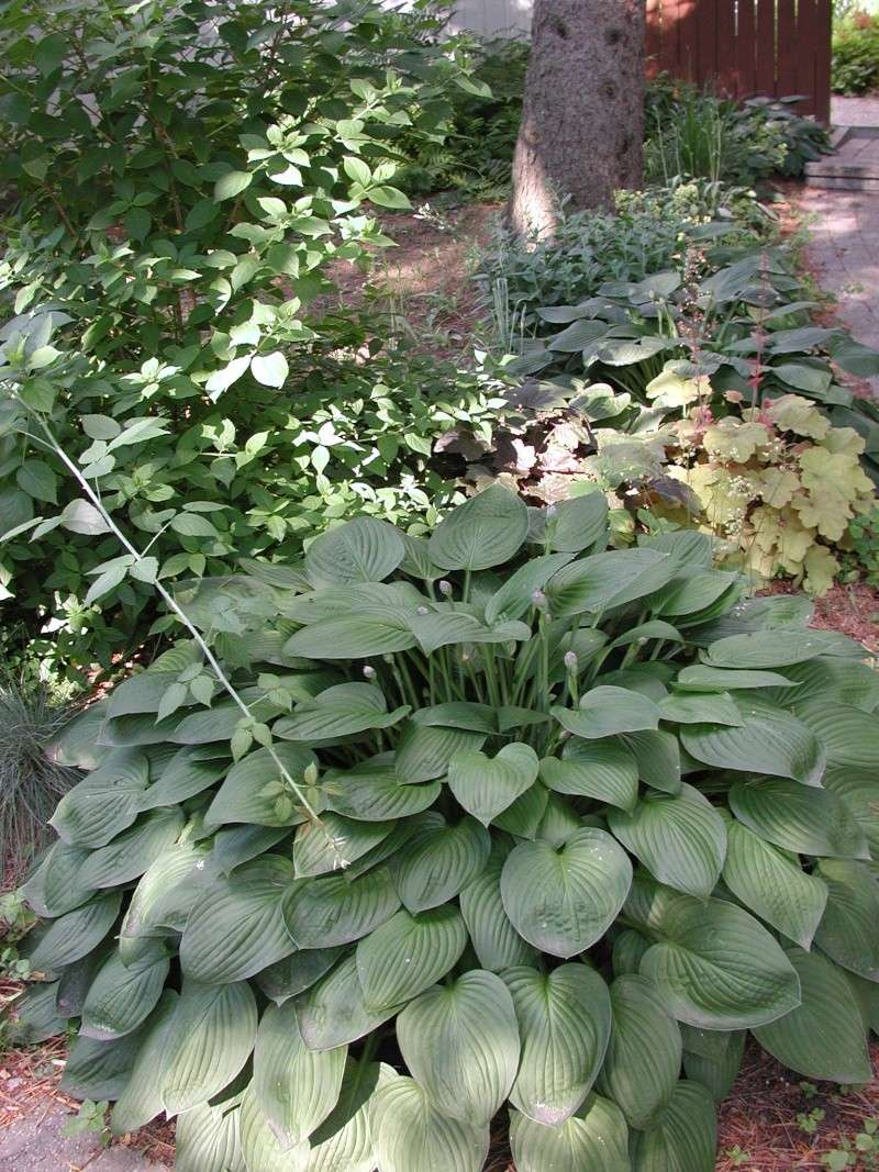 Une plante arbuste avec des pines for Plante arbuste