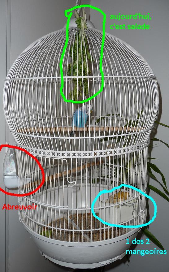 bien organiser sa cage 2 0. Black Bedroom Furniture Sets. Home Design Ideas