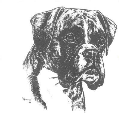 Dessin de chien boxer - Dessin de boxer ...