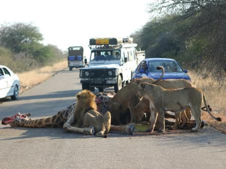 lions10.jpg