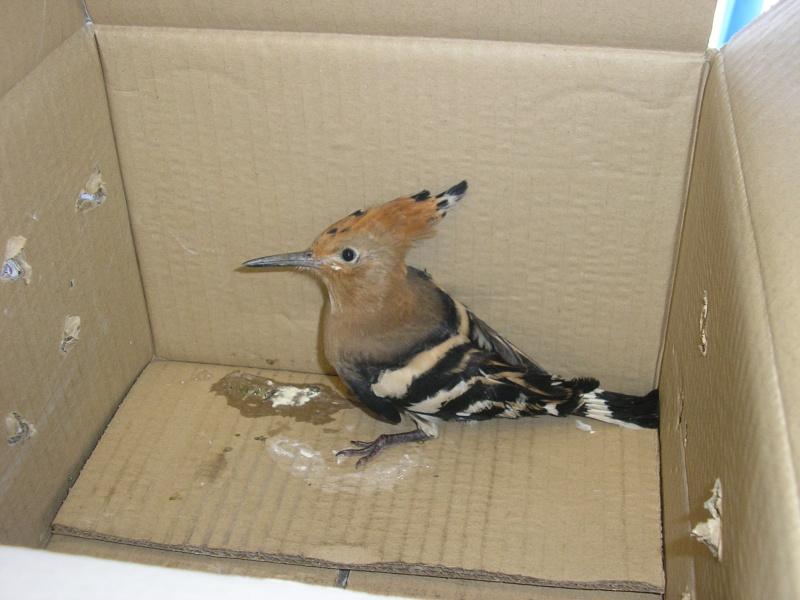 Oiseaux de nos jardins - Jardin des oiseaux petit quevilly ...