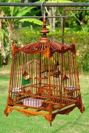 D corer une cage oiseaux - Decorer une cage a oiseaux ...