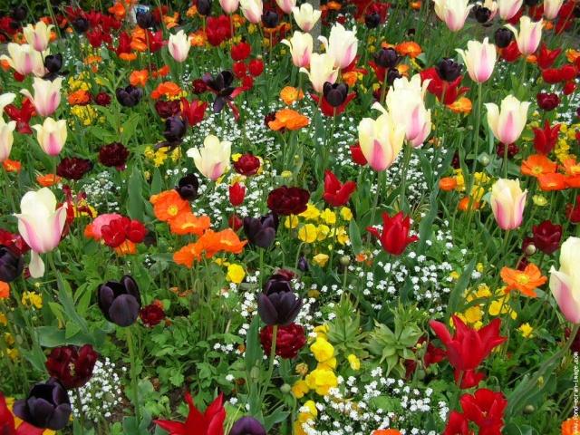 Le langage des fleurs les fleurs elles naissent dans un