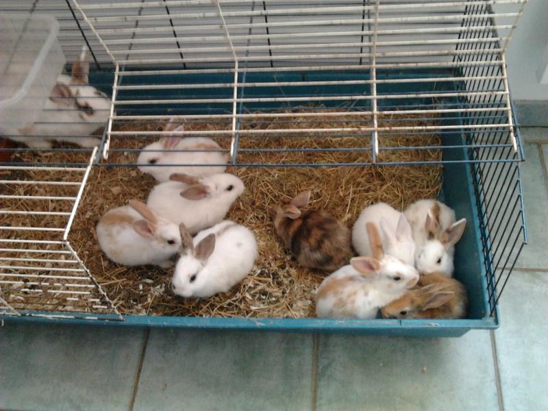 Urgent 9 b b s lapins donner n le 25 12 2011 - Maison a donner gratuitement ...