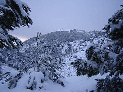http://i41.servimg.com/u/f41/11/21/97/97/neige-10.jpg