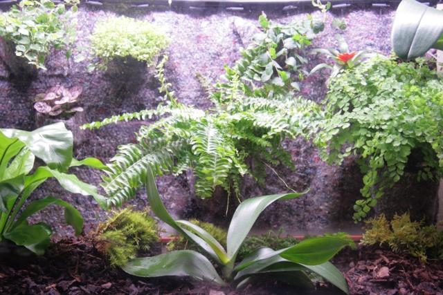 Orchidouxdingues consulter le sujet petit mur v g tal for Mur vegetal aquarium