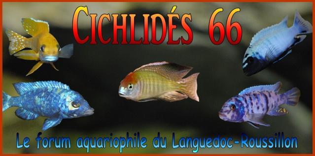 Cichlides66
