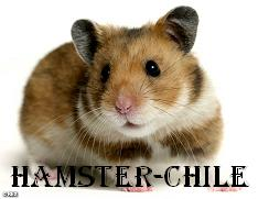 Hamster-Chile