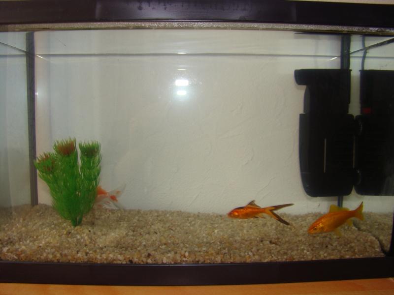 Mon 20l qui va bientot passer en 120l d poissons for Filtre aquarium 20l