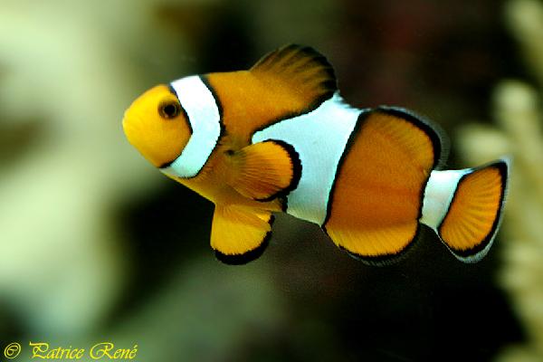 Animalerie les petit palm for Animalerie poisson
