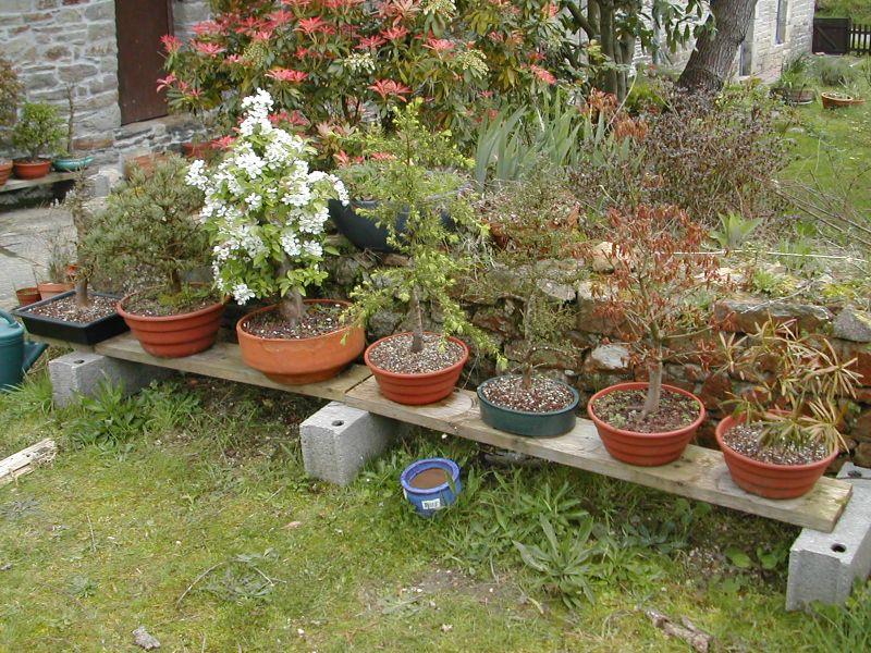 Mes bonsa - Presentoir plantes exterieur ...