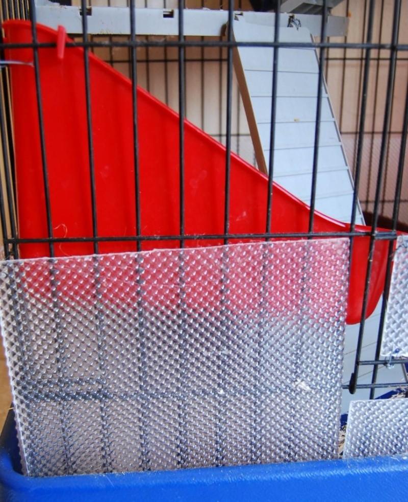 Cage en plexi ou trouver - Chelidoine verrue ou en trouver ...
