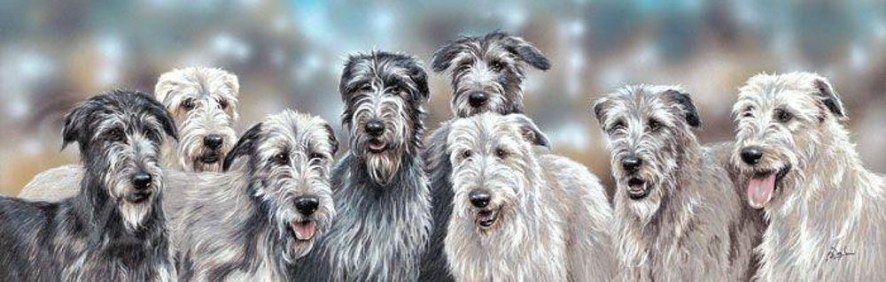 Irish Wolfhound et Deerhound... For Ever