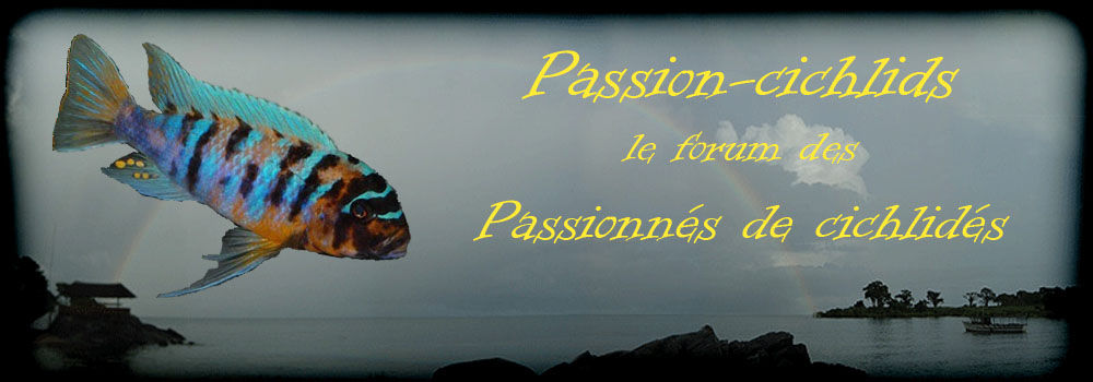 Passion-cichlids