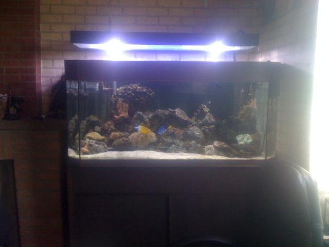 Vends aquarium marin recifl 400l complet belgique for Aquarium marin complet