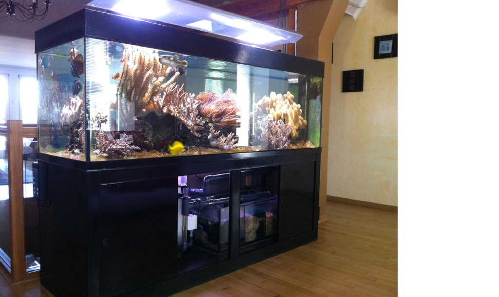 Aquariophilie forum recifal aquarium eau de mer forum - Aquarium 350 litres complet meuble et poissons ...