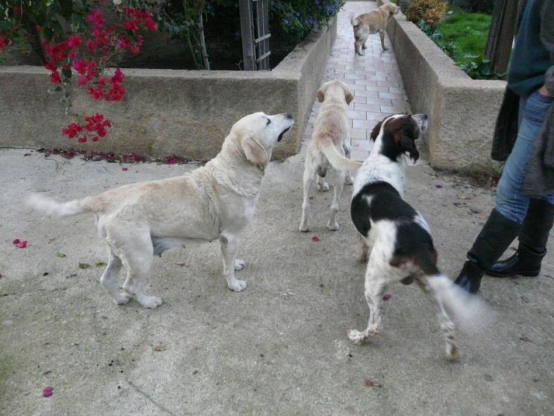 Urgence 4 chiens enferm s dans un garage sur ajaccio for Garage auto ajaccio