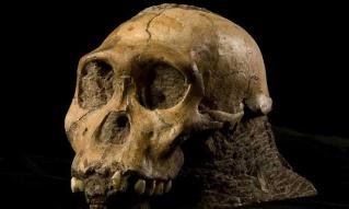 australopithèque sediba lignée évolutive découverte hominidé paléoanthropologie forum paléontologie Australopithecus sediba Lee Berger Yves Coppens grotte de Malapa Johannesburg Afrique du Sud évolution régressive