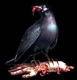 Corbeaux corvus corrax Ariège pyrénées Alfred Hitchcock les oiseaux grand corbeau brebis agneux tués Bernard Anthony France ovins tués troupeaux décimés octobre septembre 2011 forum insolite étrange