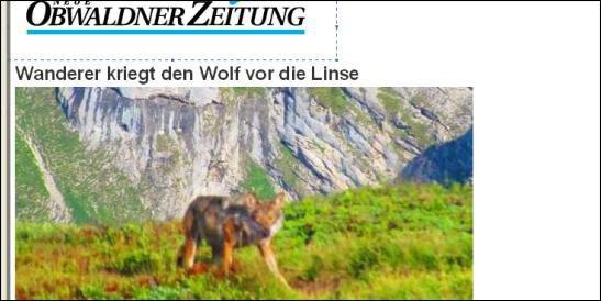 zoologie loup aperçu en Suisse juillet 2011 montagnes de Fürstein Sarnen randonneur Obwald