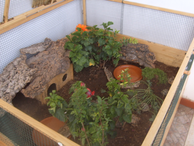 Vi presento i miei amori le mie tartarughine for Vasca per tartarughe grandi