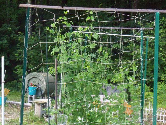 Image Result For Pole Bean Trellis Netting