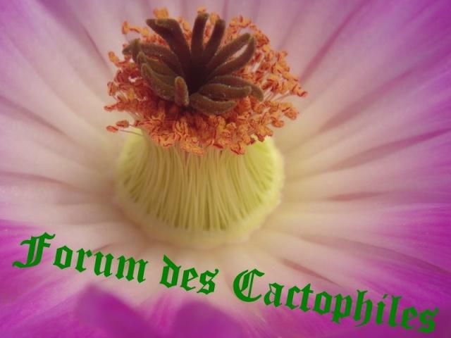 Forum dédié aux Cactus & Succulentes