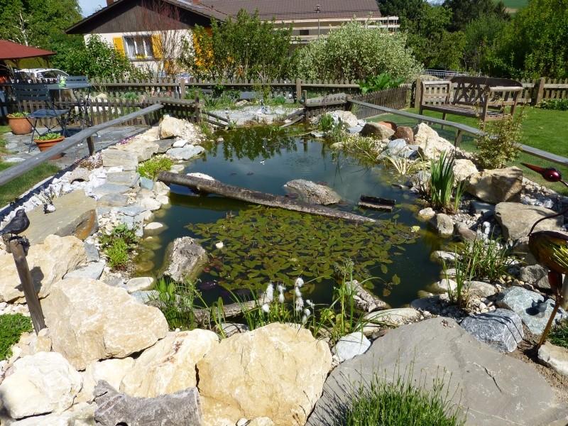 Projet de r alisation d 39 un bassin pour cistudes page 11 - Bassin tortue floride strasbourg ...