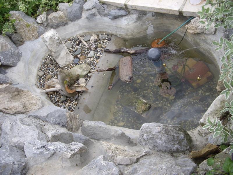 Bassin tortue terrestre maison design for Amenagement jardin pour tortue