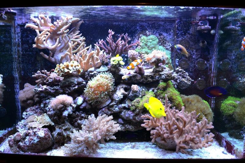 l aquarium r 233 cifal de niagaralex