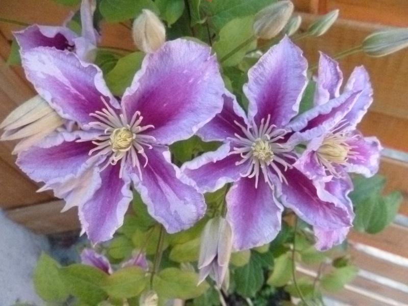 Fleurs Mois De Juillet