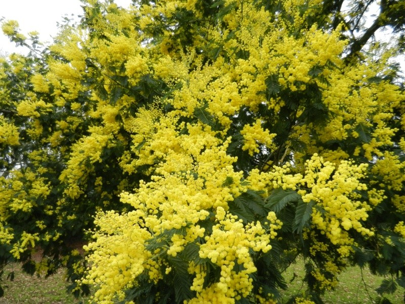 Fleurs odorantes - Arbuste fleurs blanches odorantes ...