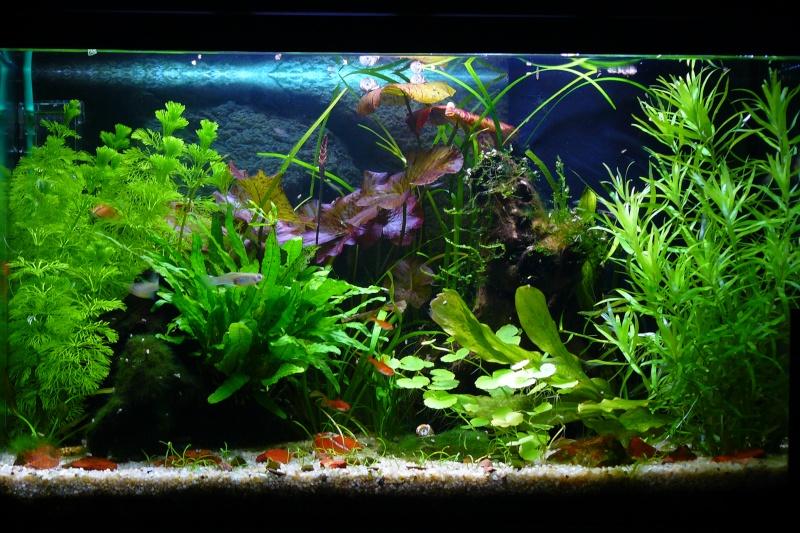 Mon aquarium de 60 litres for Exemple de decoration aquarium