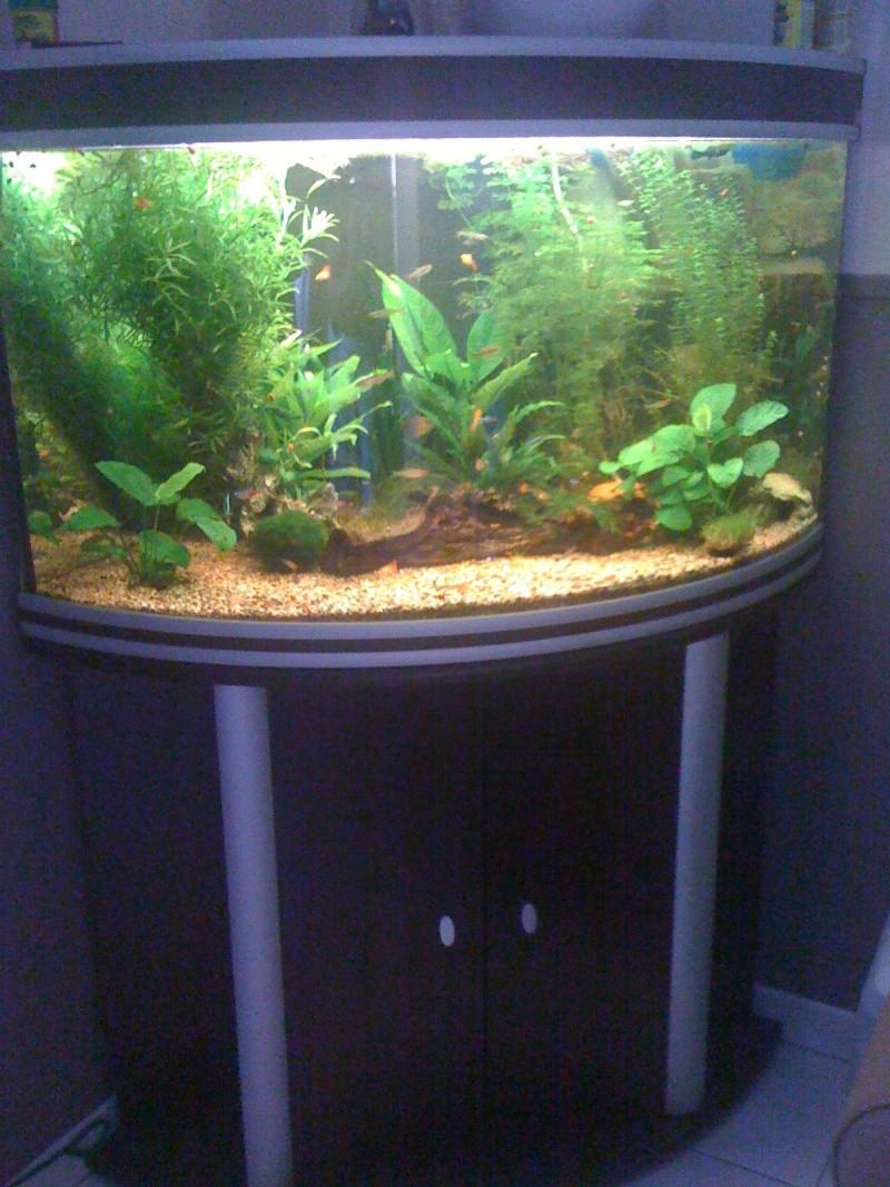 Vends aquarium aquatlantis corner 100 80 somme for Aquarium angle