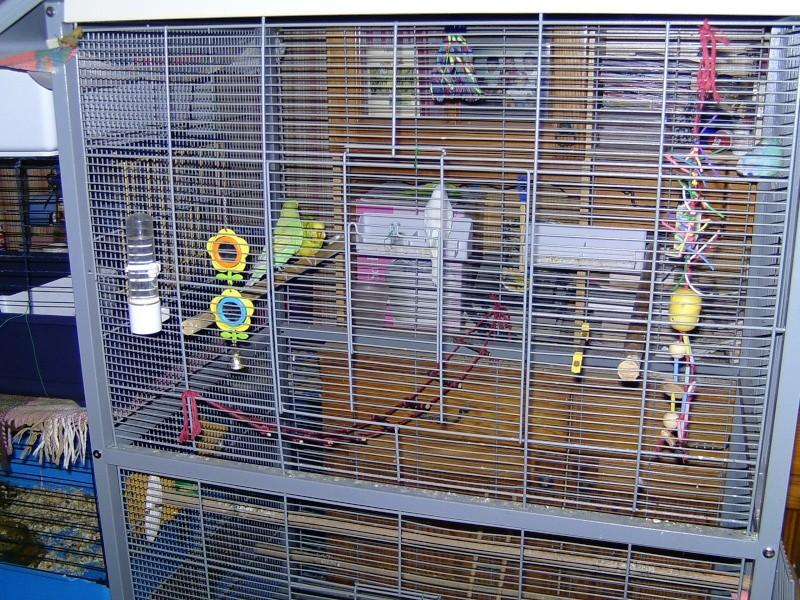 am nagement de la cage et jouets. Black Bedroom Furniture Sets. Home Design Ideas