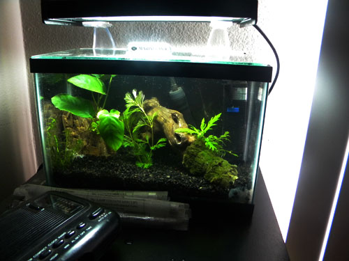 Lets See Your 2 5 Gallon Tanks And Setups 2 5 Gallon Only