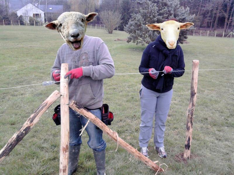 Nouvelle maison des bibis page 2 - Grillage a mouton ...