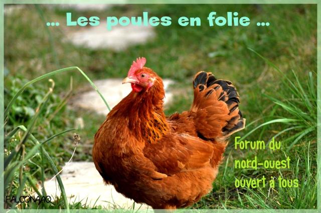 Les problemes et maladies des poules for Les maladies des poules