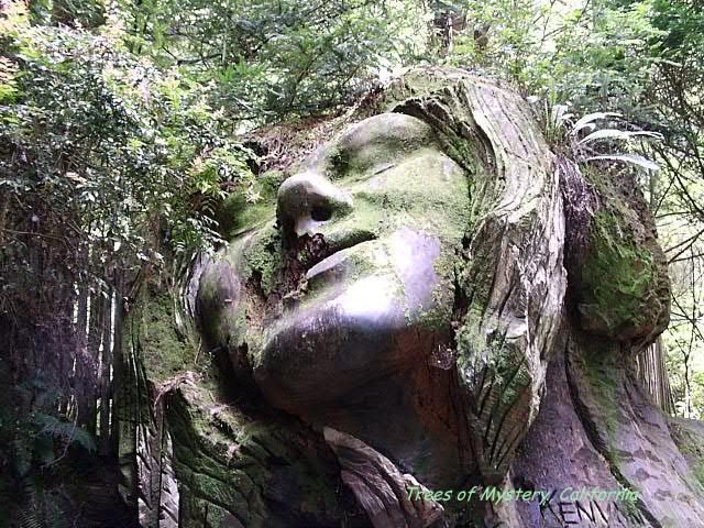 Ancient Redwoods