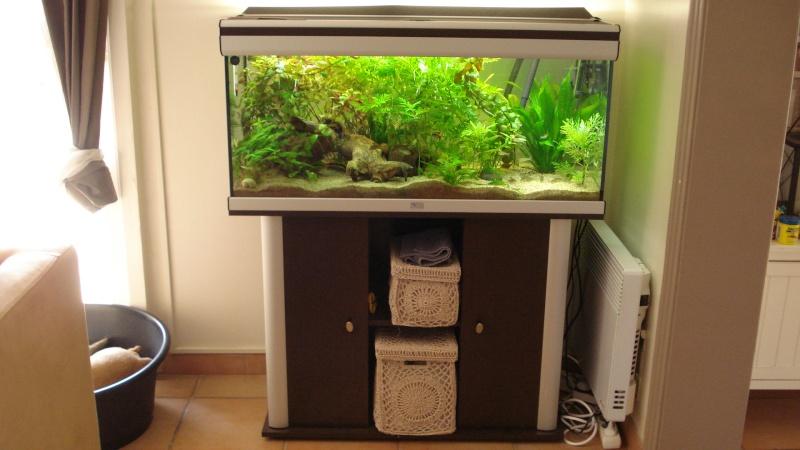 vends aquarium 180 l aquatlantis poissons 13