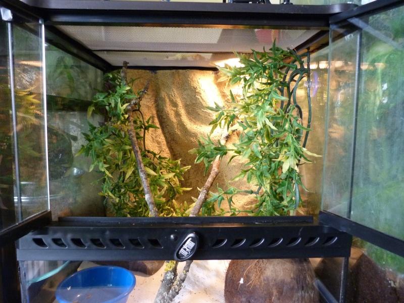 mon de d eau leurs b 233 b 233 s page 2 photos de vos animaux le monde des reptiles