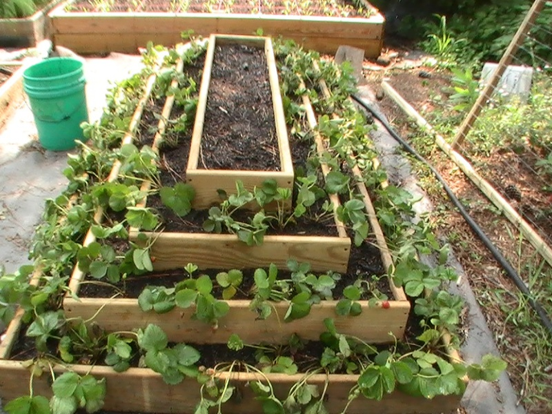 Pyramid Planter Plans http://squarefoot.creatingforum.com/t12940-strawberry-pyramid