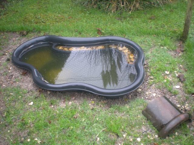 D coration bassin pour tortue aquatique grenoble 32 for Bassin exterieur pour tortue