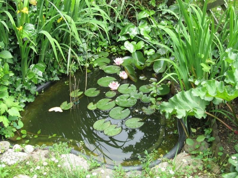 design plantes oxygenantes pour bassin 2933 plantes. Black Bedroom Furniture Sets. Home Design Ideas