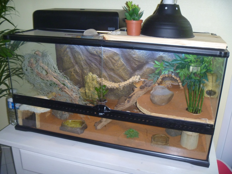 Terrarium Geckos Et Laphes