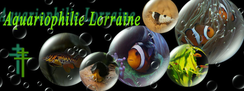 Les amis (es) aquariophiles Lorrains