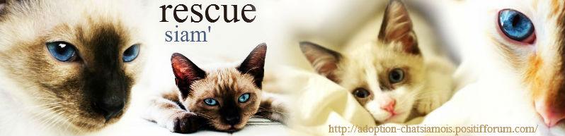 Rescue Siam'