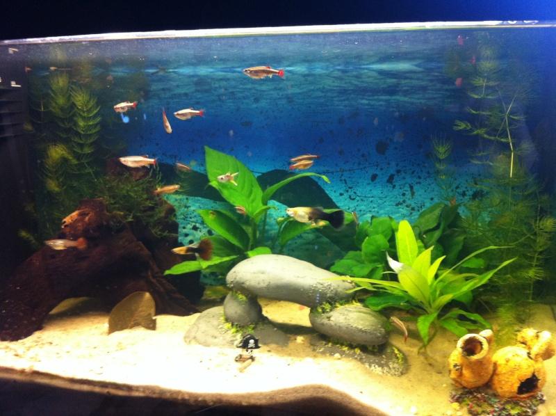 aquarium mon aquarium d 39 eau douce de 60 l page 3. Black Bedroom Furniture Sets. Home Design Ideas